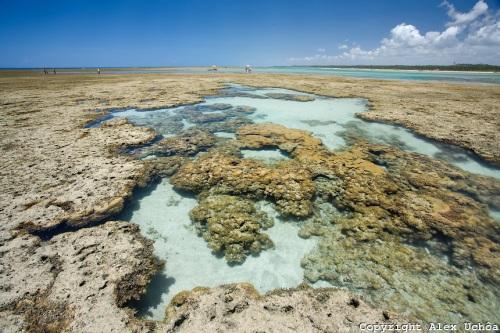 Piscinas naturais da Praia do Toque, localizada no município de São Miguel dos Milagres, Costa dos Corais, Alagoas.Foto: Alex Uchôa